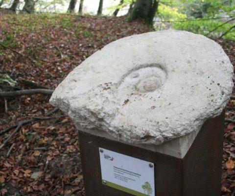 Erlebnispfad-Geologie-Ammonit